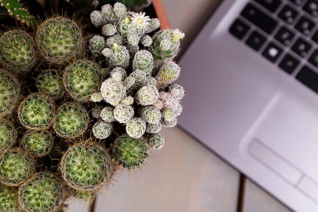 Plat leggen van cactus en laptopcomputer