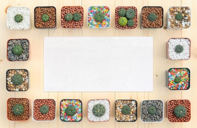 Plat leggen van cactusplanten in de pot met vloeipapier voor ontwerp.