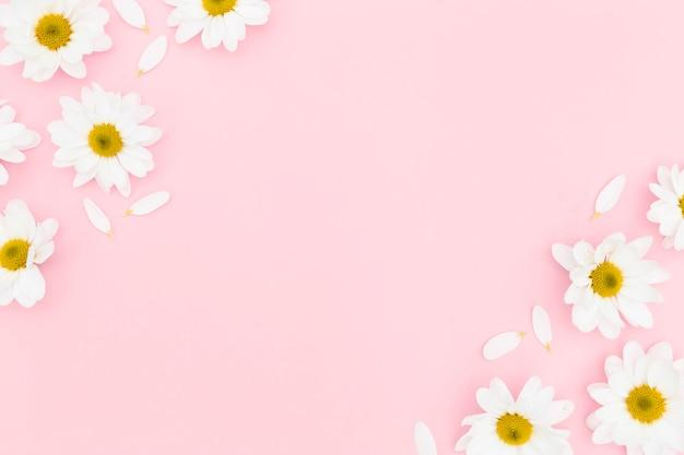 Plat leggen van daisy met kopie ruimte