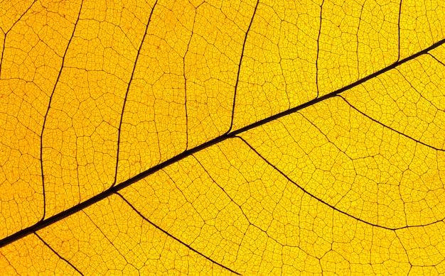 Plat leggen van doorschijnende bladlamina-textuur