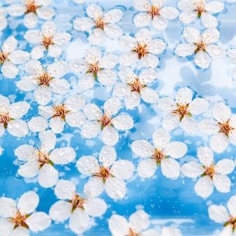 Plat leggen van drijvende wilde kersen witte bloemen met druppels op het oppervlak van water, lichtblauwe achtergrond