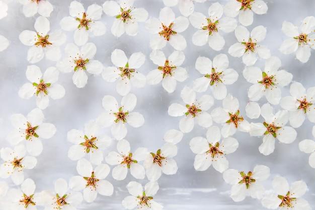 Plat leggen van drijvende wilde kersen witte bloemen op het oppervlak van water, lichtgrijze achtergrond