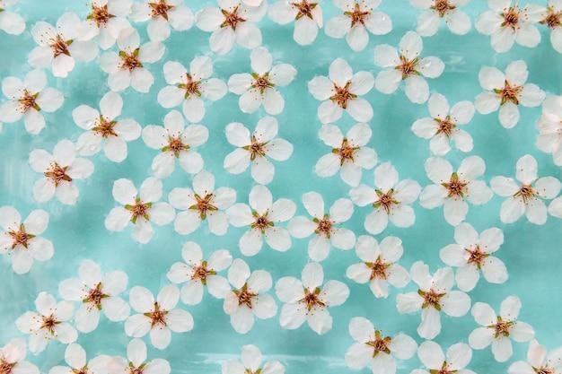 Plat leggen van drijvende wilde kersen witte bloemen op het oppervlak van water, pastel blauwe achtergrond