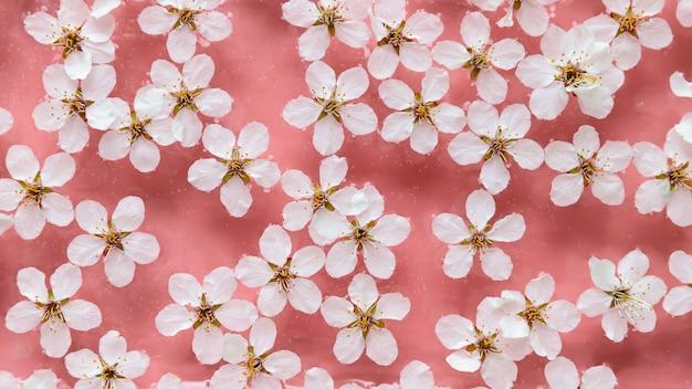Plat leggen van drijvende wilde kersen witte bloemen op het oppervlak van water, pastel roze achtergrond. lente en bloesem /