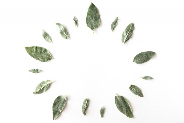 Plat leggen van frame met groene takken, bladeren en bloemblaadjes op witte achtergrond