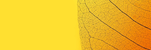 Plat leggen van gekleurd blad met transparante textuur