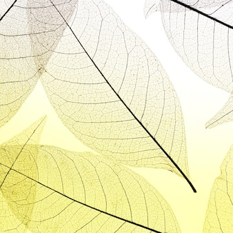 Plat leggen van gekleurde doorschijnende bladeren