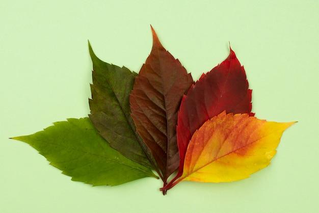 Plat leggen van gekleurde herfstbladeren
