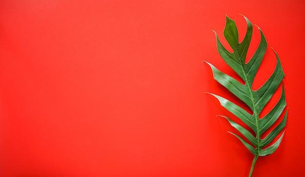 Plat leggen van groene tropische monstera blad met kopie ruimte