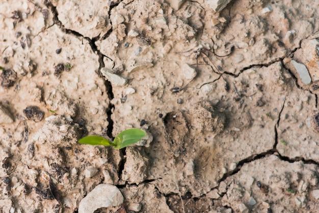 Plat leggen van grond met scheuren