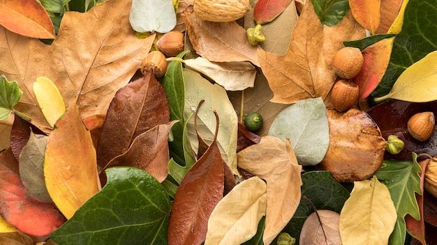 Plat leggen van kleurrijke herfstbladeren