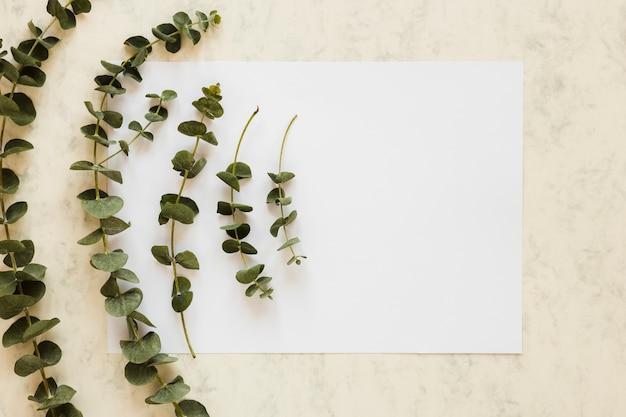Plat leggen van papieren kaartsjabloon met bladeren