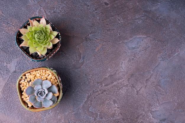 Plat leggen van planten met kopie ruimte