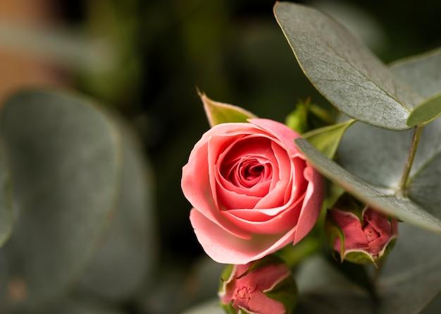 Plat leggen van prachtig bloeiende kleurrijke roze bloemen