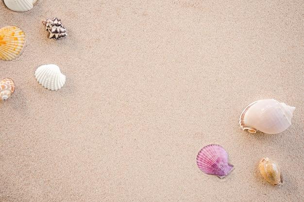 Plat leggen van schelpen op zandstrand.