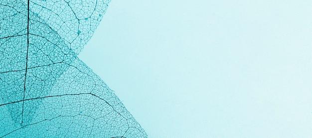 Plat leggen van transparante bladeren met gekleurde tint