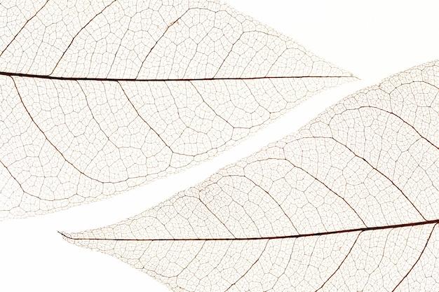 Plat leggen van transparante bladeren textuur