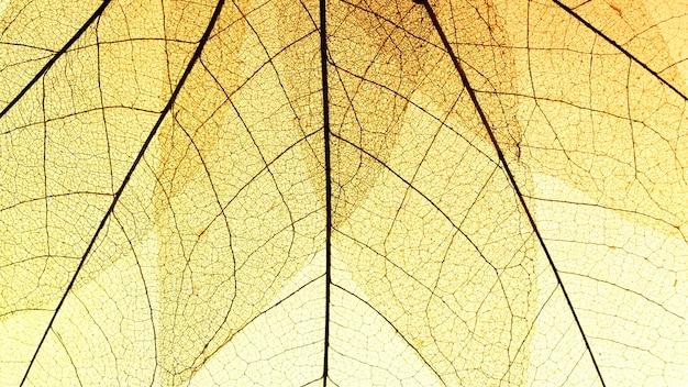 Plat leggen van transparante bladeren