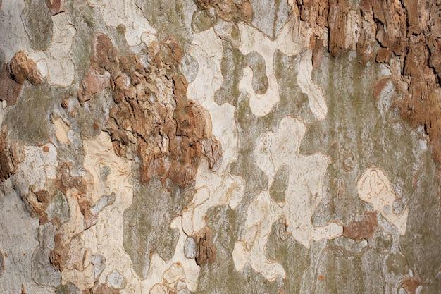 Platanus occidentalis boomschors textuur close-up. een boom die schors afstoot. het patroon is vergelijkbaar met een militair camouflagepatroon.