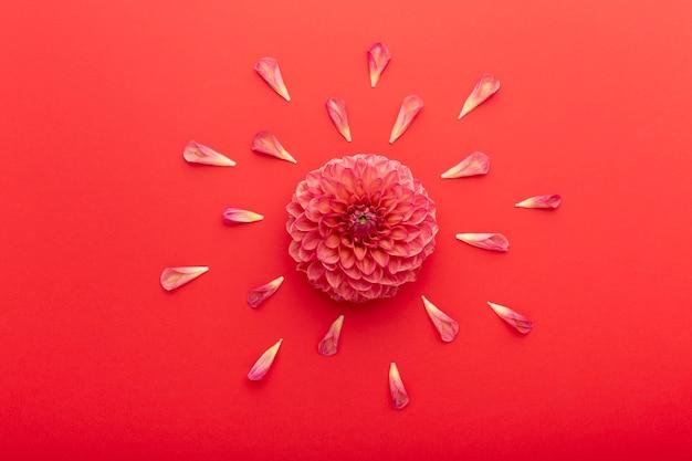Platliggend mooi assortiment bloemen