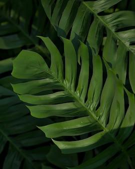 Platliggende 3d-samenstelling van groene palmbladeren