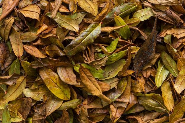 Platliggende droge bladeren