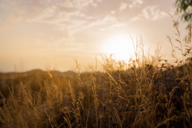 Platteland en zonsondergang