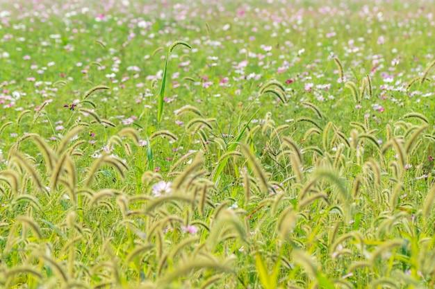 Platteland planten blad agronomie veld