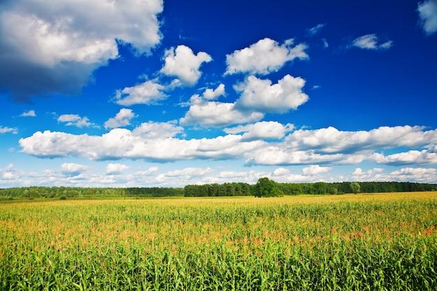 Platteland veld maïs landschap