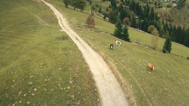 Platteland weg bij sun mountain top antenne