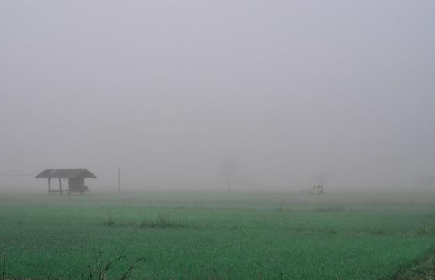 Plattelandshuisje in het padieveld en mist in de winter. chiang mai, thailand