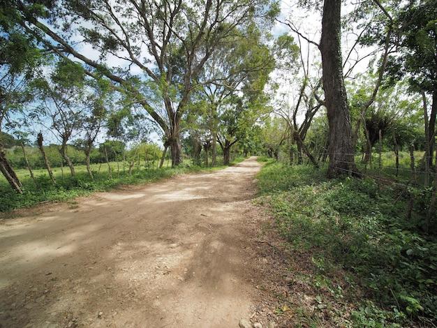 Plattelandslandschap, landbouwbedrijfgebied en gras met omheining op landelijk landschap met landweg. dominicaanse republiek.