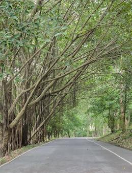 Plattelandsweg met tunnelbomen