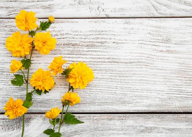 Pleniflora gele bloemen