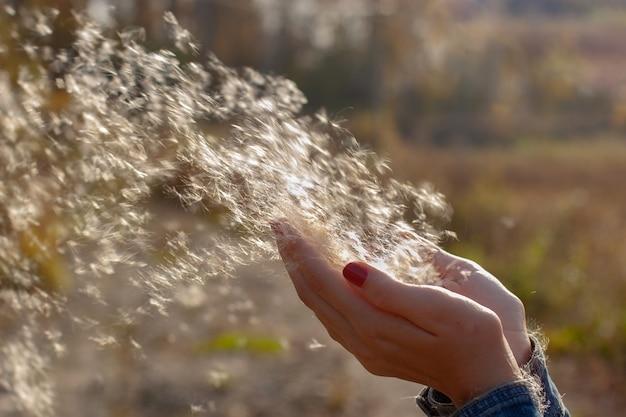 Pluisjes in de lucht van lisdodde vliegen uit de handen van het meisje in de wind. selectieve ondiepe focus op de pluisjes, herfstachtergrond wazig. ruimte kopiëren.