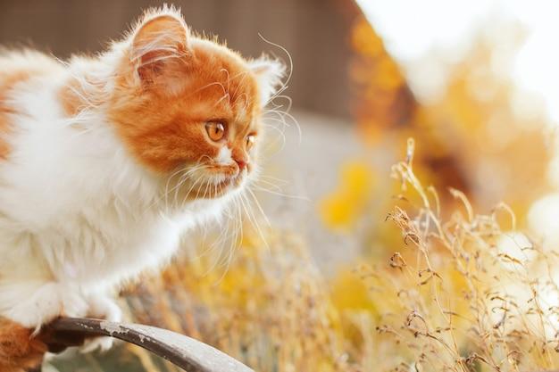 Pluizig gemberkatje in de de herfsttuin