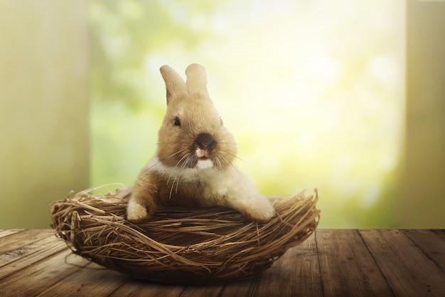 Pluizig konijn in mand op de houten vloer