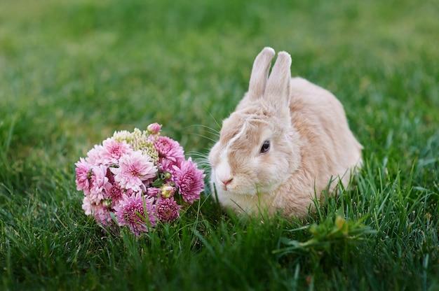 Pluizig konijntje en een boeket bloemen op het gras