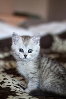 Pluizig wit kitten. leuke, geliefde, mooie kitten close-up.