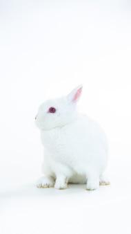 Pluizig wit konijn