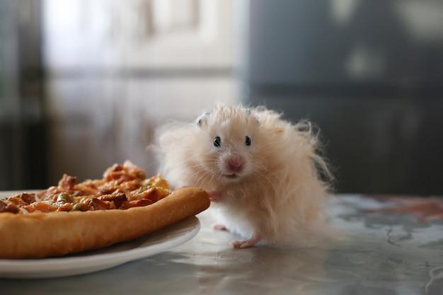 Pluizige beige hamster staat in de buurt van een bord pizza