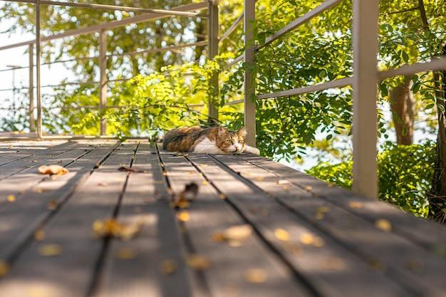 Pluizige cyperse kat rusten op een houten veranda in de zomer met kopie ruimte