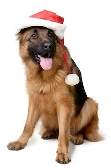 Pluizige duitse herdershond met kerstman hoed