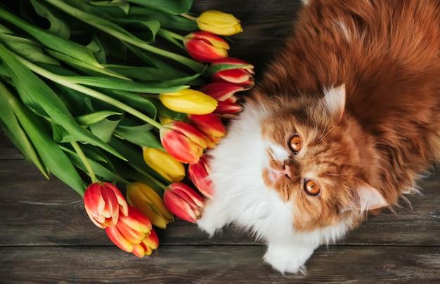 Pluizige gemberkat op een achtergrond van rode en gele tulpen.
