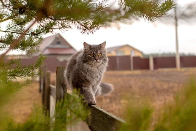 Pluizige grijze kat zit op een houten hek