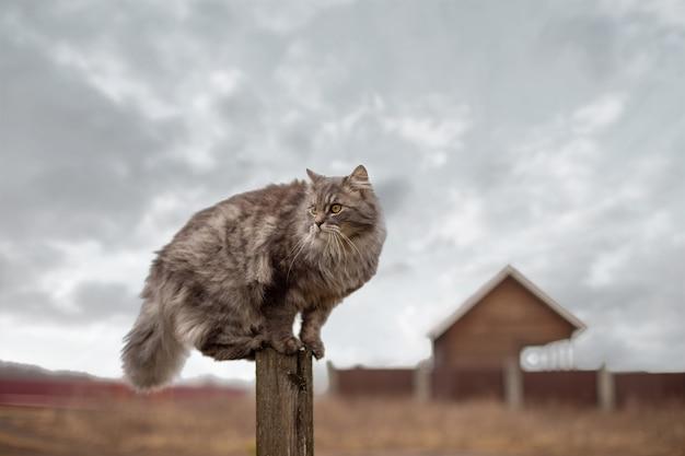 Pluizige grijze kat zit op een houten paal tegen een bewolkte hemel