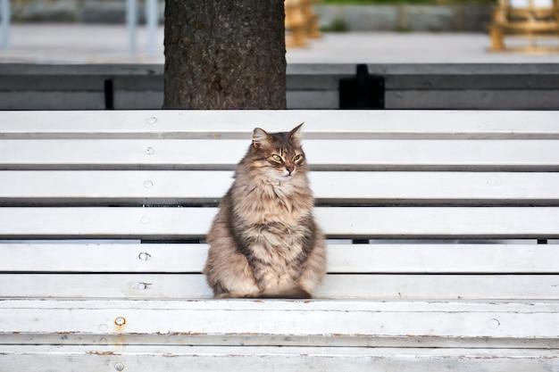 Pluizige grijze zwerfkat zittend op een bankje in het park