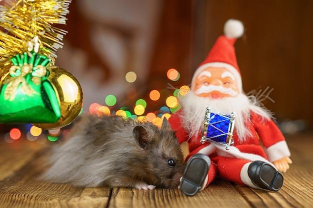 Pluizige hamster met santa claus op mooie bokehachtergrond