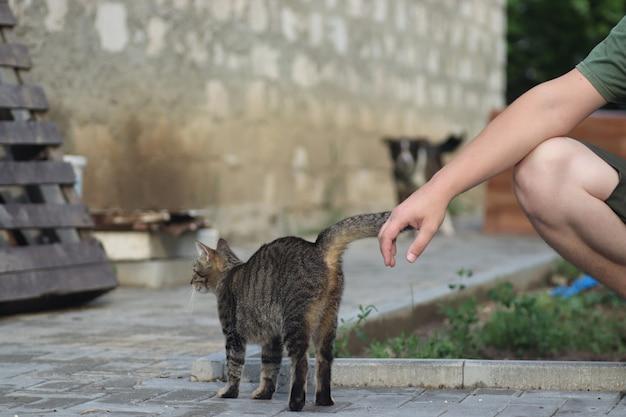 Pluizige huisgestreepte kat loopt naar buiten op een warme zonnige zomerdag