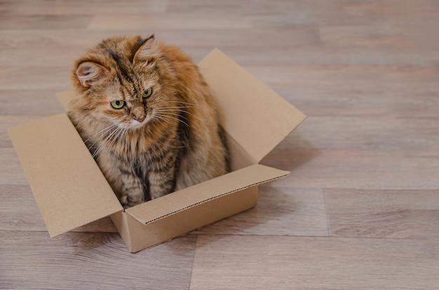 Pluizige huiskat zit in een kartonnen doos. grappige dierengewoonten.